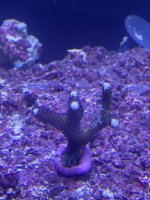 coral 2a - 2020_11_02.JPEG