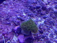 coral 4 - 2020_11_02.JPEG