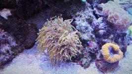 DSC_2188 oranje filter.JPG